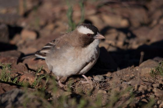 Call for Papers: Hot Birds- Birds of the African Arid Zones