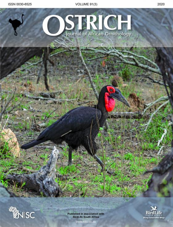 Celebration: 90 Years of Ostrich