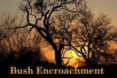 Bush Encroachment – changes, causes, consequences and cures