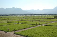 Southern African Pasture Science in the 21st Century